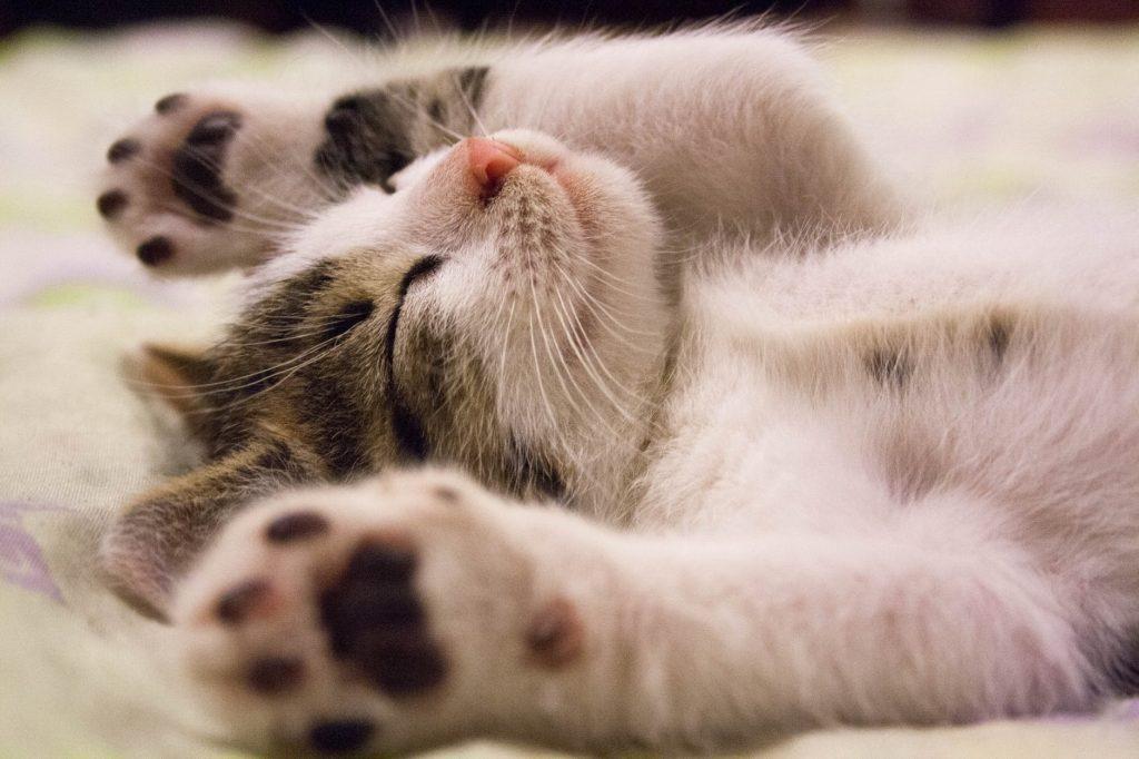 gattino che dorme a pancia all'aria